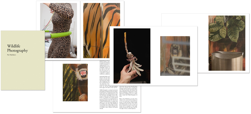 Paul Hutchinson: Wildlife Photography